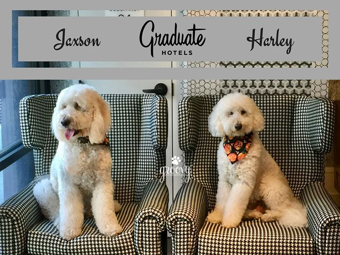 Graduate Richmond Pet Friendly Hotel Read What Harley And Jaxson Thought Of Their Visit