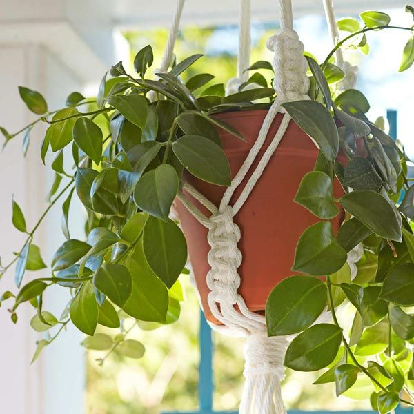 Macrame planter hanger with pot and plant