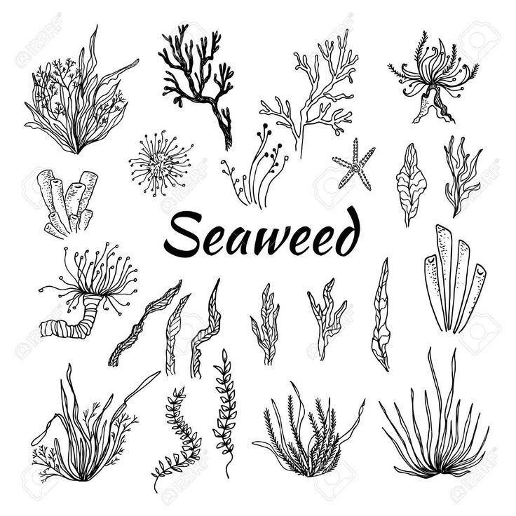 Billedresultat For Seaweed Drawing Billedresultat Drawing Esquisser Seawee Billed Hand Drawn Vector Illustrations Underwater Drawing Underwater Art