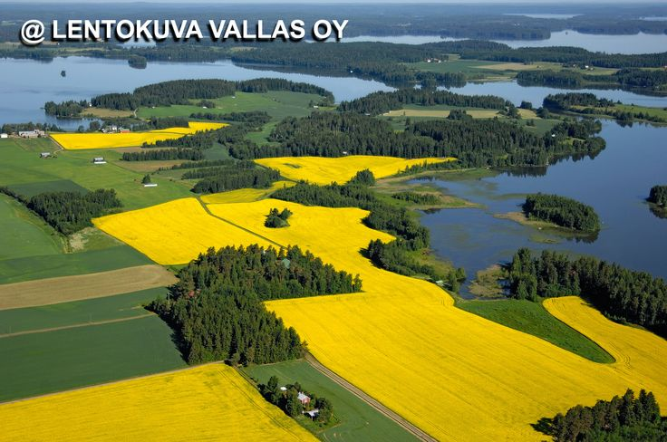 Vesilahti, viljelysmaisema Ilmakuva: Lentokuva Vallas Oy