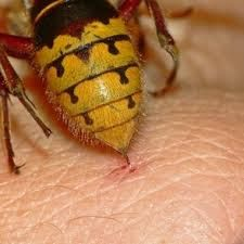 Meso Shqipe: Bee stings, the miracle of alternative medicine