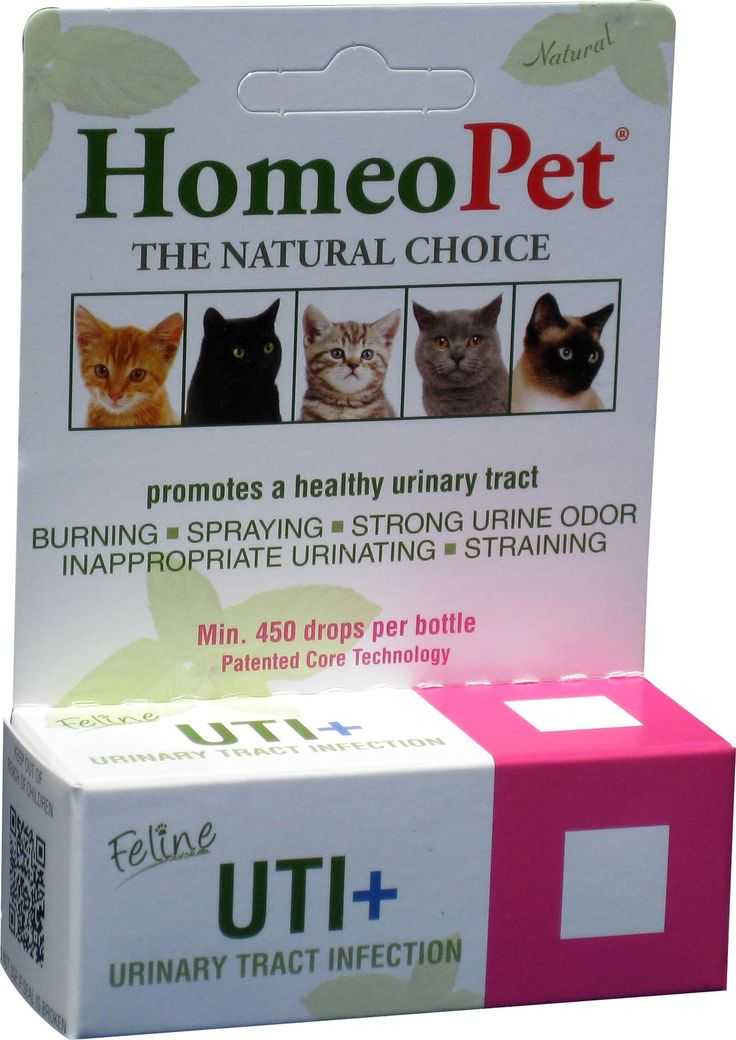 Feline urinary infections home remedy