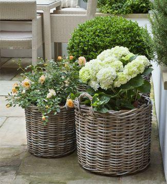 M s de 1000 ideas sobre jard n de lavanda en pinterest - Cultivar lavanda en casa ...
