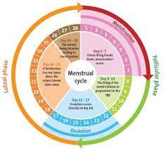 El ciclo menstrual le ocurre a una mujer cada 28 días normalmente, esto sucede porque durante esos días el cuerpo se prepara, sucede la ovulación para  un esperado embarazo pero al no tenerlo el cuerpo desecha el ovulo y la capa de sangre que lo rodeaba, teniendo como resultado la menstruación.