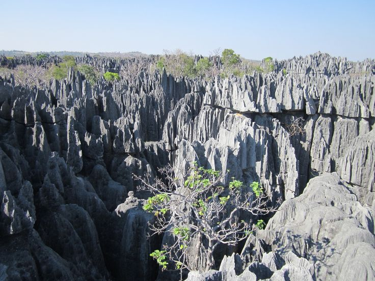 ✶Forest of Knives, MADAGASCAR. It is truly intriguing that wildlife can happily exist amidst razor sharp vertical rocks in this mesmerizing forest. You can hike around the bizarre pinnacles of limestone and observe different kinds of birds and lemurs.✶