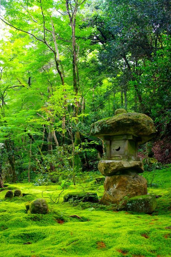Moss.covered old Well and Forest floor