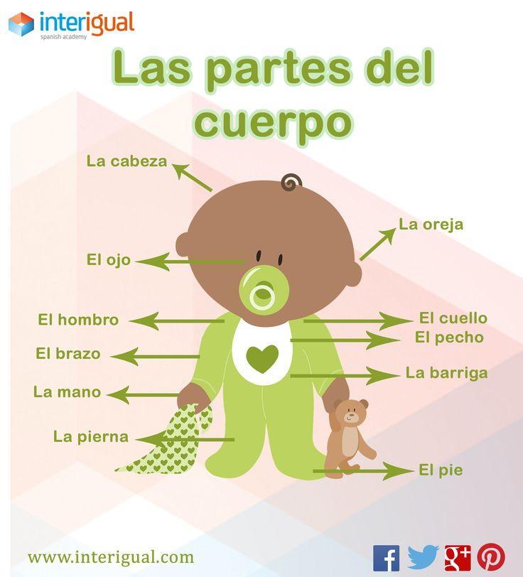 65 best Cuerpo images on Pinterest | Körperteile, Spanisch lernen ...