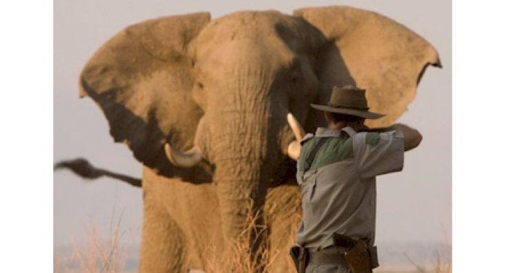 Petition! Der Jagdtourismus trägt maßgeblich zur Ausrottung selten gewordener Tierarten in Afrika bei. Wir können etwas dagegen tun. Unterschreiben Sie diese Petition, damit Deutschland künftig die Einfuhr von Trophäen bedrohter Arten verweigert. Hintergrund Jagdskandale wie die grausame Pfeil-Jagd...