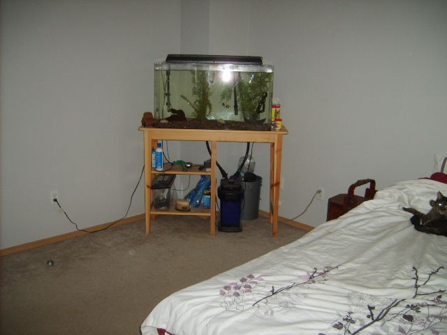 other side of master bedroom had to take two pics thats a 55 gallon