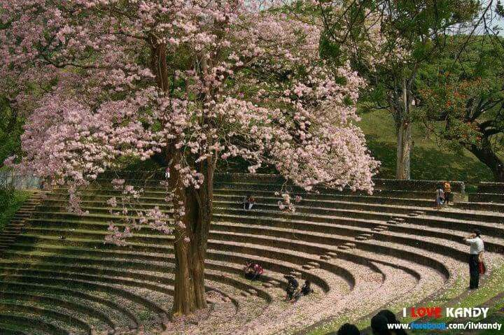 Peradeniye, kandy Farm landscaping, Open air theater