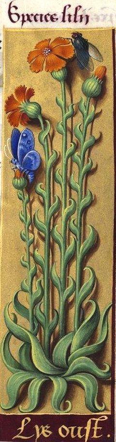 Lys oust - Species lilii (Le dessin indiquerait une caryophyllée, mais les fleurs sont de couleur orange. Lys oust est peut-être l'abrévation de Lys oustremer) -- Grandes Heures d'Anne de Bretagne, BNF, Ms Latin 9474, 1503-1508, f°117r