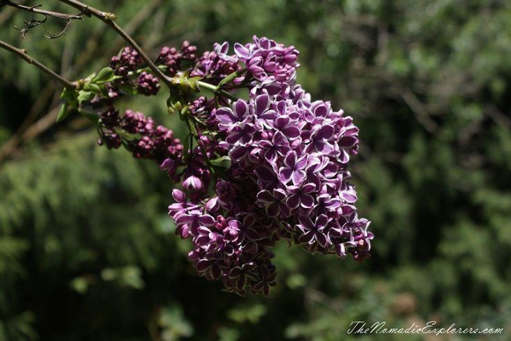 Tasmania, Day 7. Spring in Allendale Gardens, Smithton