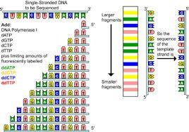 Image result for dna sequencer