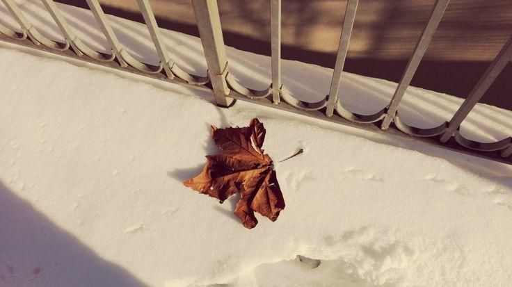 https://www.flickr.com/photos/106936662@N04/shares/069H2b   Foto di Anna Giulia