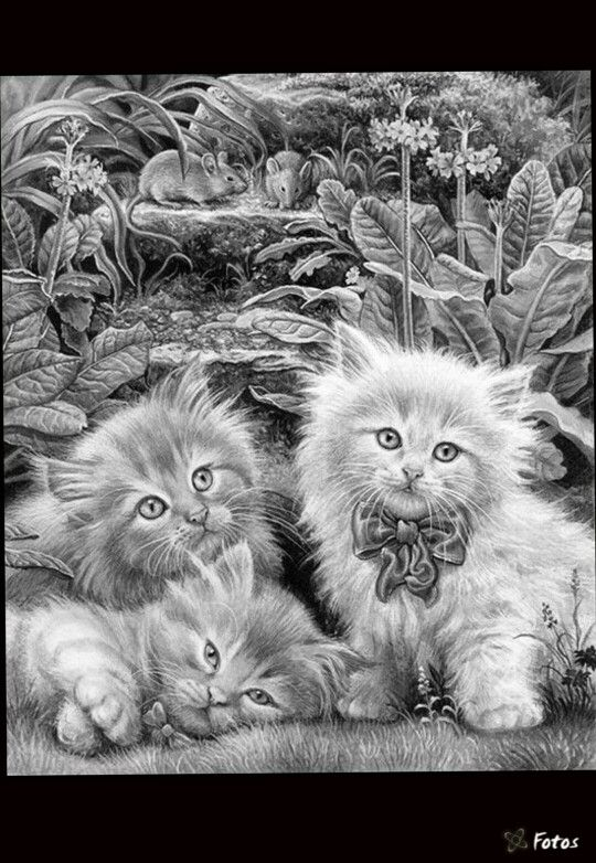 242 best adult coloring pages: cats, cats, cats images on ... - Coloring Pages Cats Kittens
