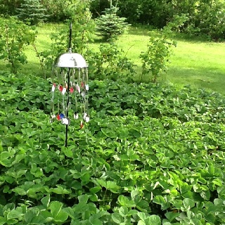 Keep The Birds Out Of The Berries Garden Edible Pinterest Berries And Birds
