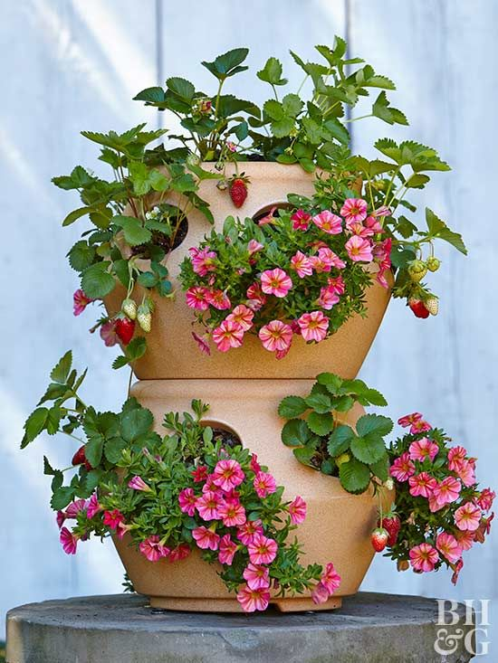 Grow almost any herb you want in a strawberry planter