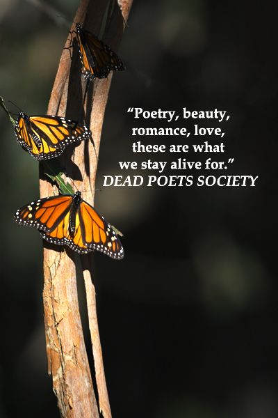 """""""Poetry, beauty, romance, love, these are what we stay alive for.""""  Dead Poets Society – On image of migrating MONARCH BUTTERFLIES at PISMO BEACH, CALIFORNIA -- Examine inspiring touchstone quotes for wedding vows at http://www.examiner.com/article/over-thirty-touchstone-quotes-for-wedding-vows-and-speeches"""