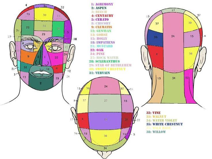kramer-testa-davanti-dietro-sopra.jpg (909×682)