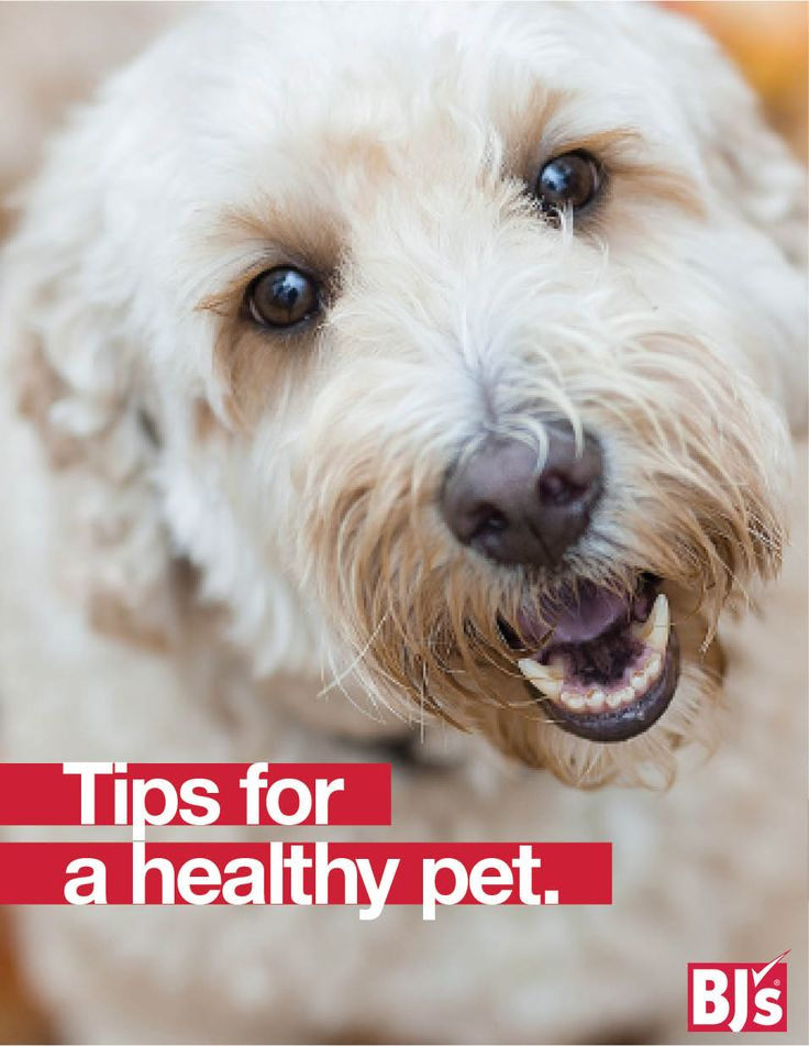 Dog Care Advice: Keep your four-legged friend healthy and happy with these veterinarian tips for dog parents. http://stocked.bjs.com/family/how-keep-your-fluffy-friends-healthy