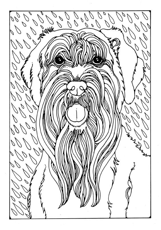 260 best Just Dogs images on Pinterest Coloring pages, Coloring - new snow dogs coloring pages