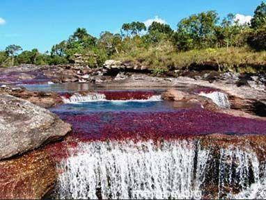 Caño Cristales, uno de los ríos más lindos del mundo. #Viajes Descubre la Colombia profunda con Mambe.org!