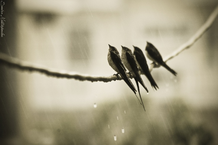 rain or shine, birds of a feather flock together.