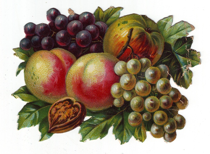 Victorian Era Summer Fruits die cut scrap 1800s antique scrapbooking