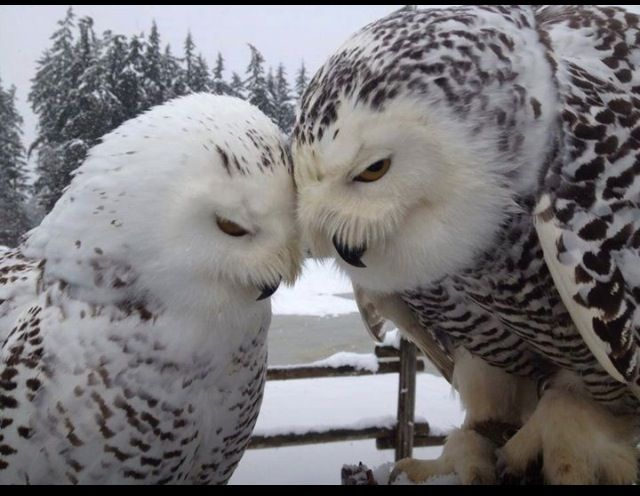 Birds love each other too. :)