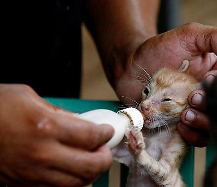 Volunteering projects are available to join and work for animals and birds those are injured, homeless and sick. Inquire for the program on info@work-travel-learn.com or visit us at www.work-travel-learn.com