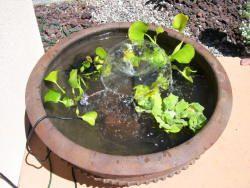 DIY Patio Pond