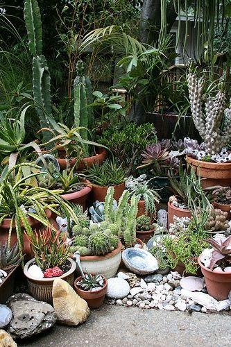 Magnifique Parterre Cactus House Plants Plants 640 x 480