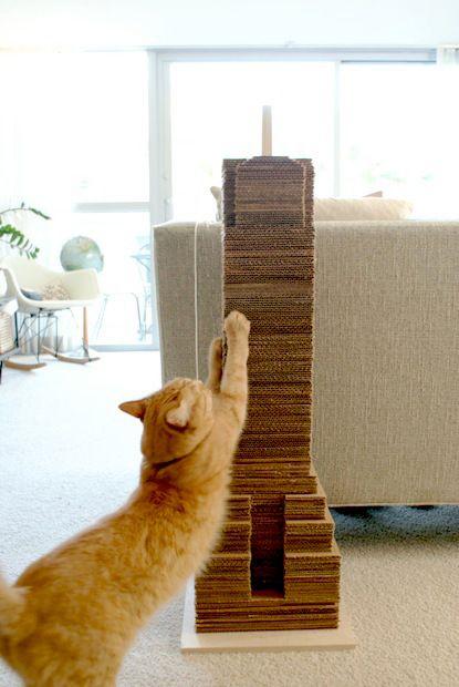 Selbstgemachtes für die Katz' - Katzen Forum