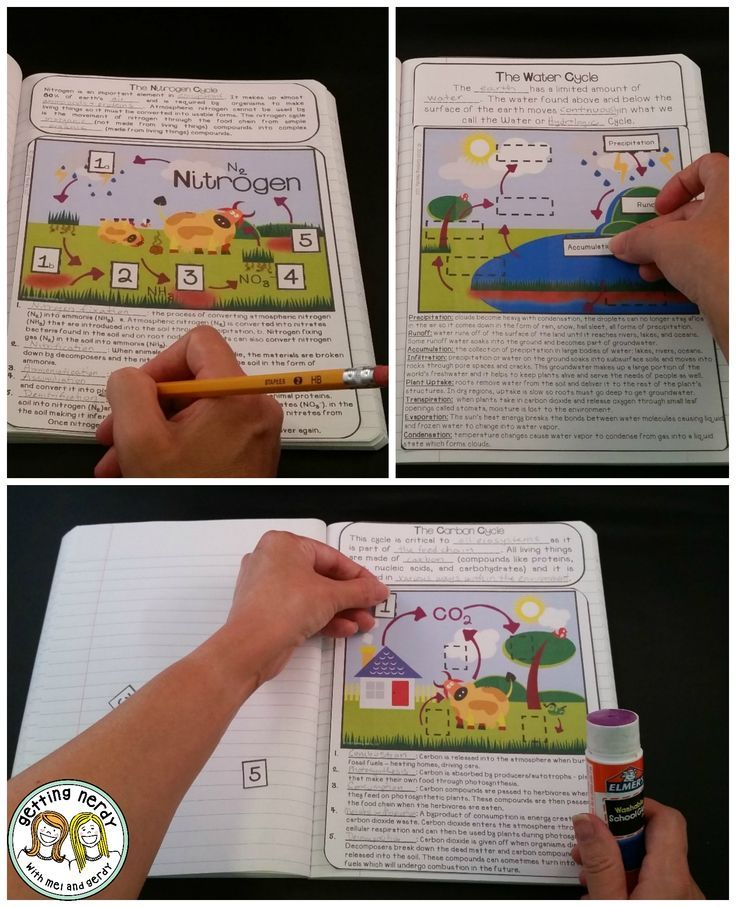 Best 20+ Carbon Cycle ideas on Pinterest | 5th grade science ...