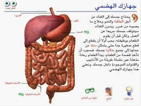موسوعة شبكة العلوم : الجهاز الهضمي