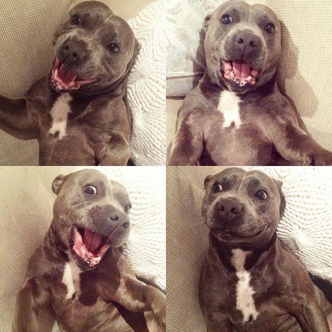 20фотографий собак-обнимак, которые растопят ваше сердце