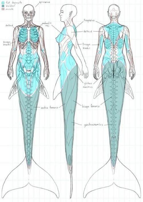 75 best skin + bone images on pinterest   skeletons, drawings and, Skeleton