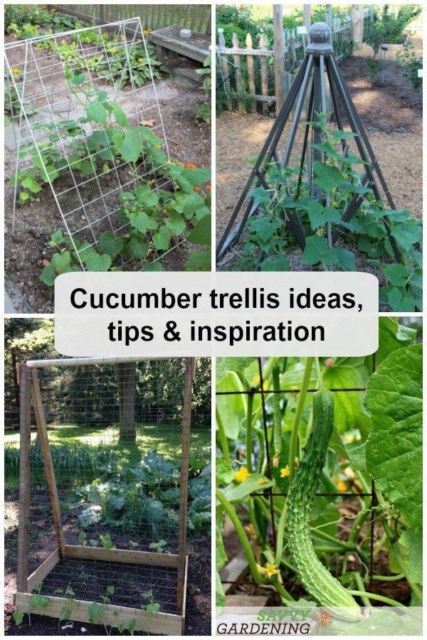Cucumber Trellis Ideas Tips In 2020 Cucumber Trellis Vegetable Garden Trellis Vegetable Garden Diy