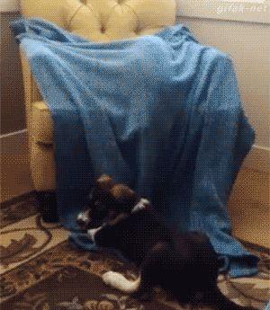 Un gatito muy travieso