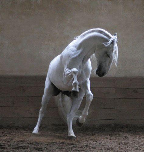 L'apprentissage des chevaux