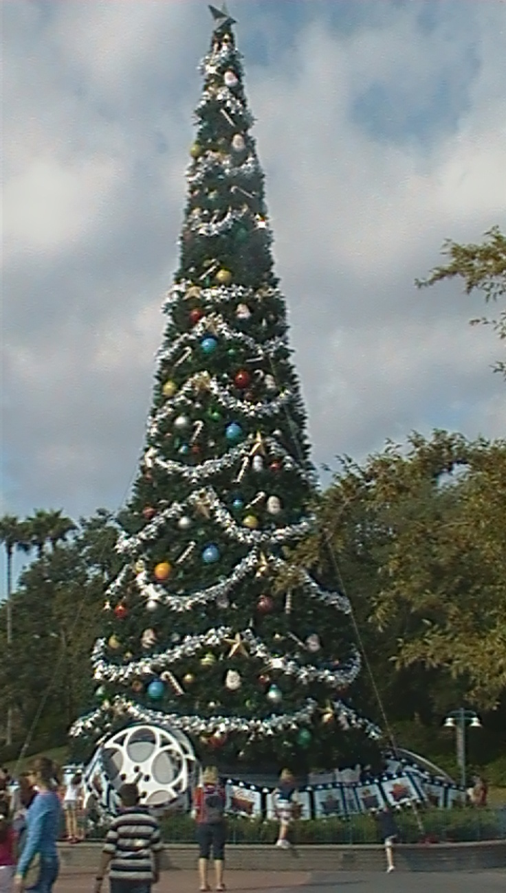 Christmas Tree Outside Of Disneyu0027s MGM Studios