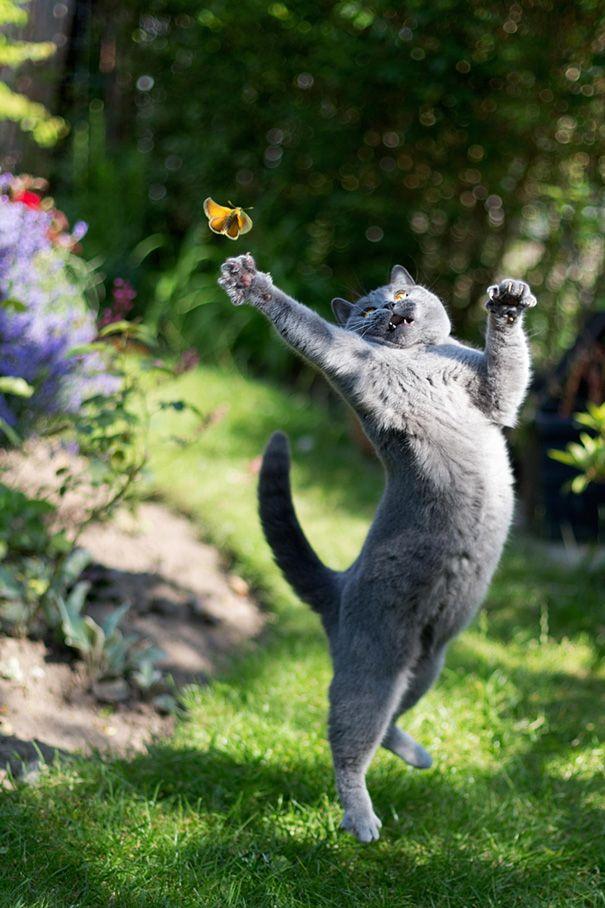 22 Fotos De Gatos Tiradas No Momento Perfeito