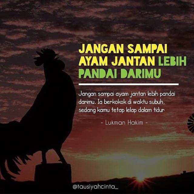 Pejuang Subuh Mana Suaranya Jangan Mau Kalah Sama Ayam Follow