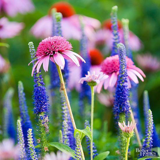 Perennial Plant Combinations Gardening Tips Trends Perennials Flowers Garden