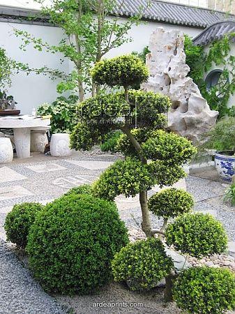 349 best niwaki images on pinterest bonsai japanese for Formal japanese garden
