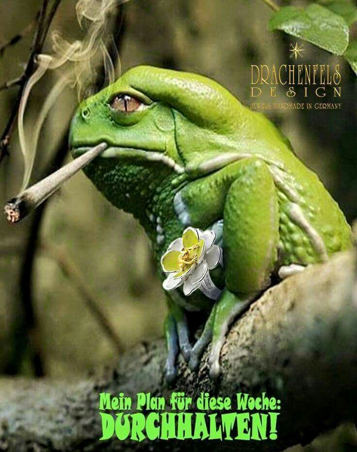 Durchhalten | Funny frogs, Funny animal pictures, Funny