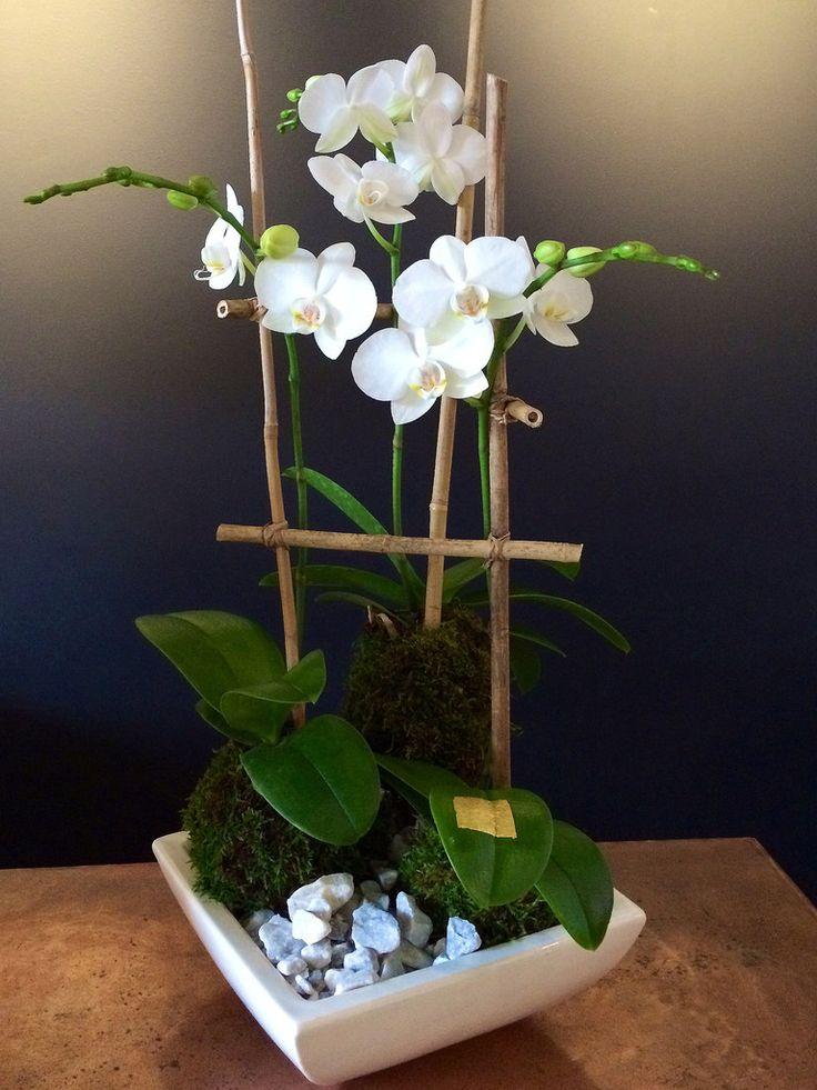 Orquidea em kokedama. Uma bela e pratica maneira de cultivar.