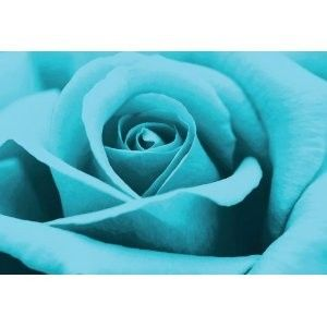 Mmmm: Rose Aren T, Turquoi Dreams, Stunning Turquoi, Turquoi Rose, Rose Prints, Photography Colour Therapy, Photographycolour Therapy, Favourit Colour, Turquoise Cyan Aqua