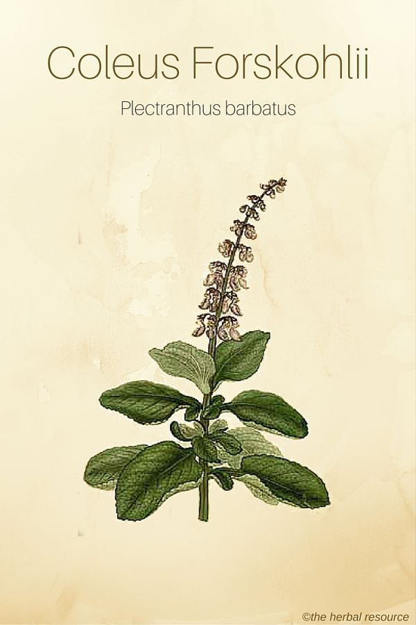 Brahmi Herb Benefits And Side Effects