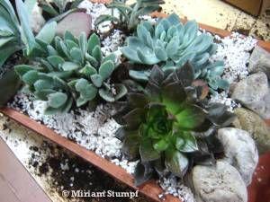 arranjo de suculentas em telha: Succulent, Ems Telha, Suculenta Ems, Succulents, Suculentas Ems, Done Ems